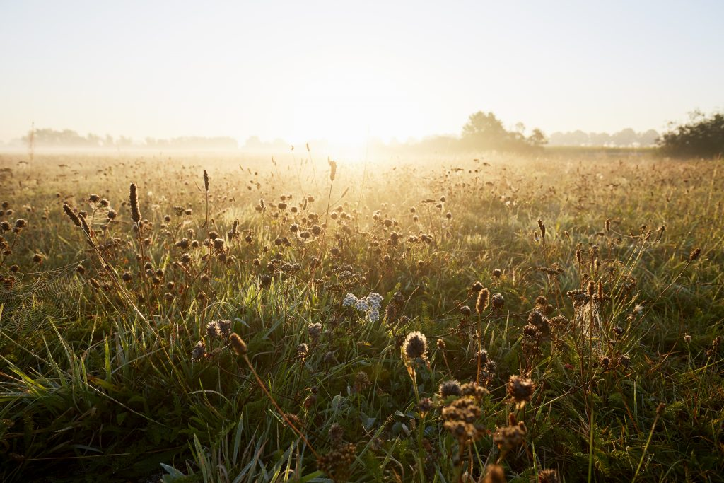 Wildflowers at idyllic landscape and fog during sunrise in the morning, rural scene