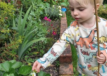 Beau picking strawberries
