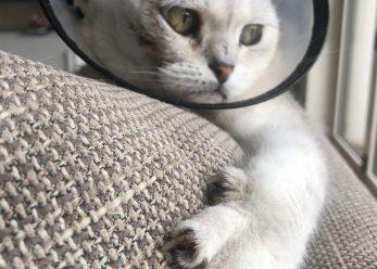 Cat IMG_6725