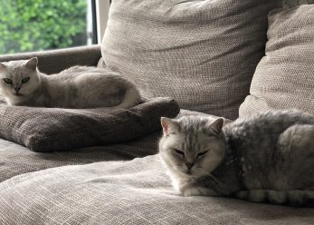 Couch cats