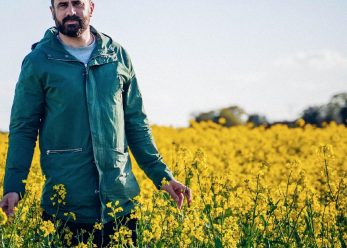 MP in Yellow Brassica field