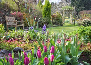 Perfect garden tulips