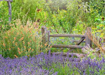 Summer garden fragrance bluebells