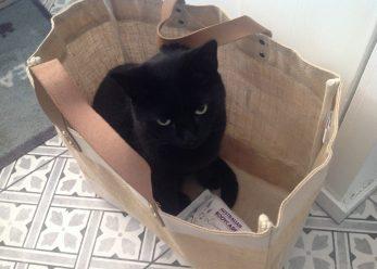 Wilfie in bag