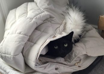 wilfie in coat
